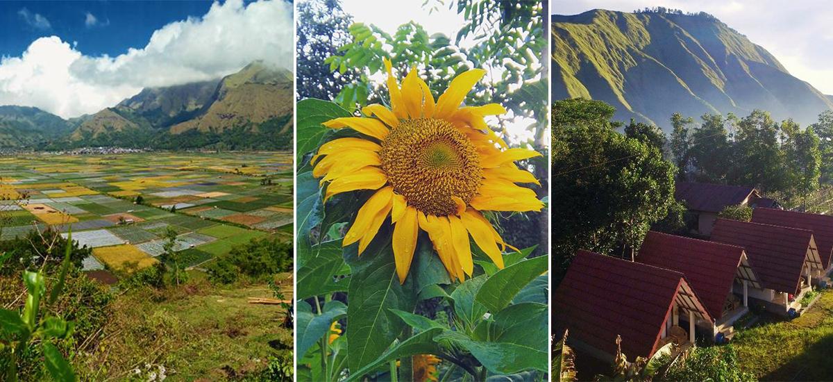 La bellezza inaspettata dell'area del Buyan: Pergasingan Hill (foto © Sembalun Bungalow e Sembalun Kita Cottage)