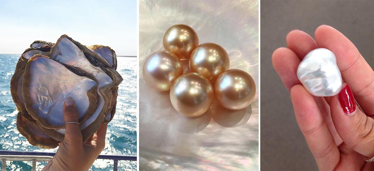 La pintada maxima, le perle color oro dei mari del sud e una perla barocca (Foto © Autore Pearls)