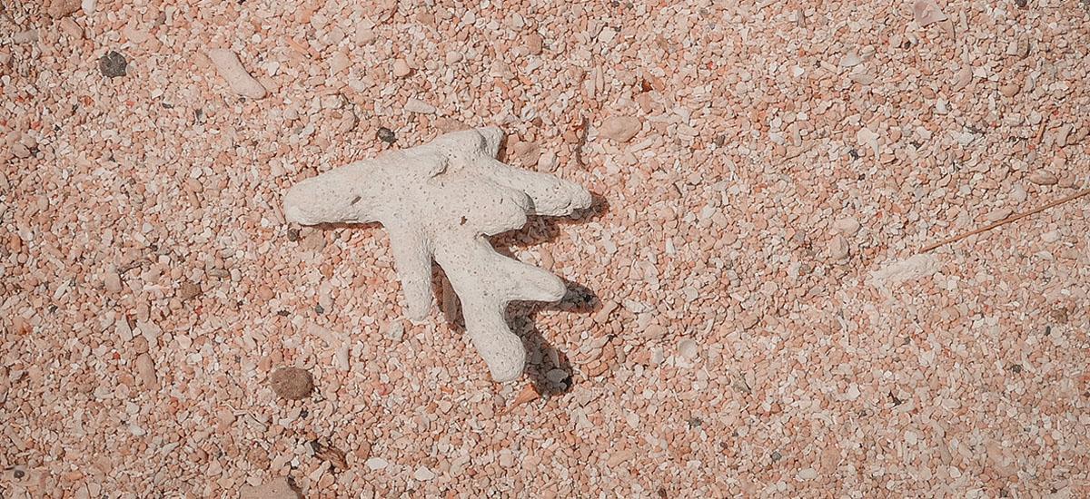 Isole Gili la guida pratica: la sabbia e i coralli