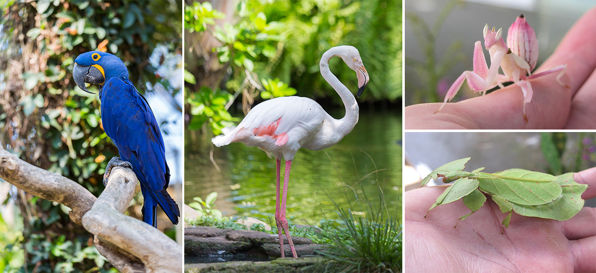 Il Bali Bird Park (foto © Kars Alfrink e Fiona Wijya)