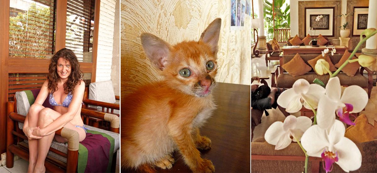 A Kuta c'è un'ottima offerta di strutture di ogni tipo, alcune con gatto incluso!