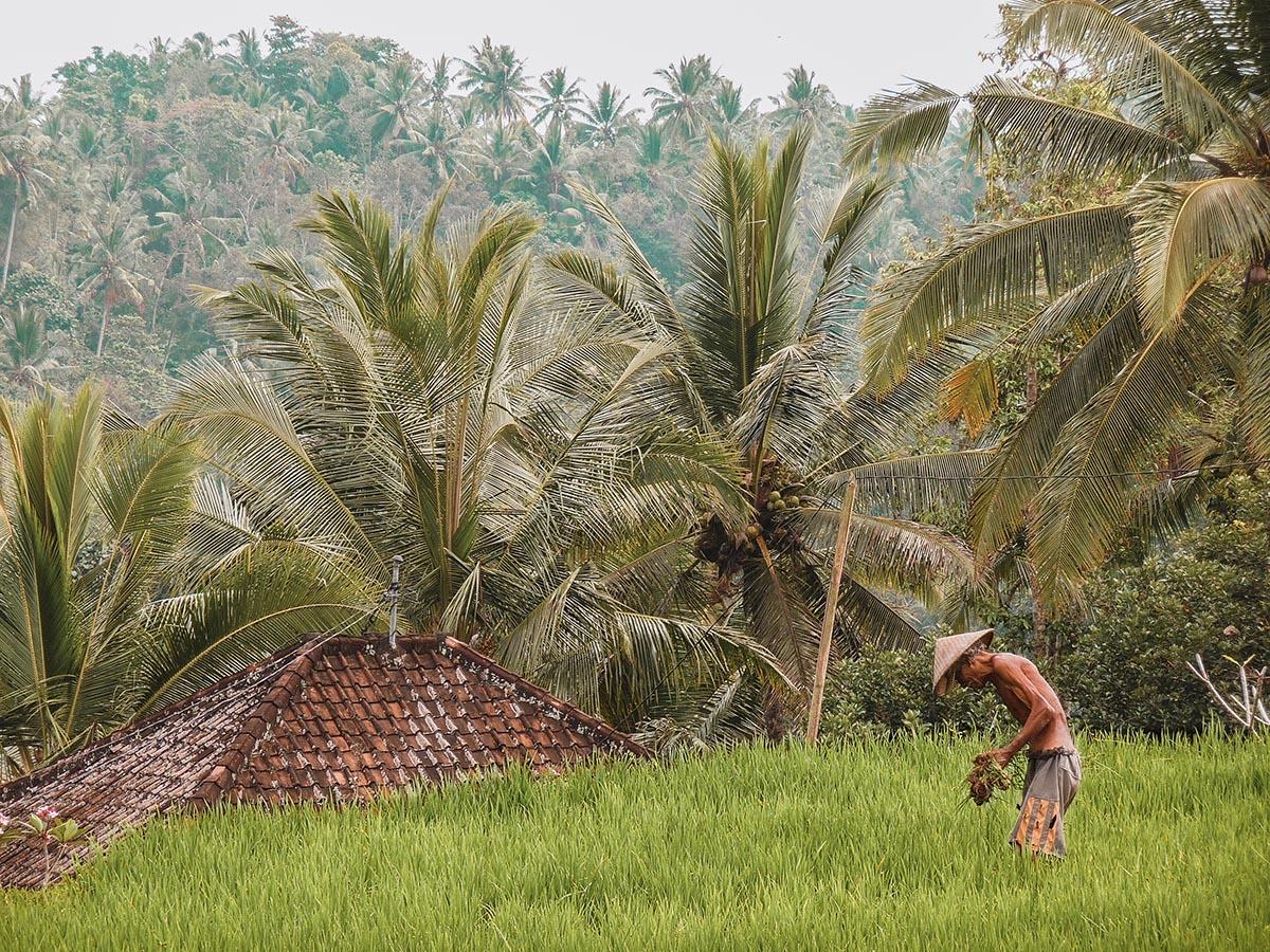 Tutti i tipi di visto per visitare l'Indonesia