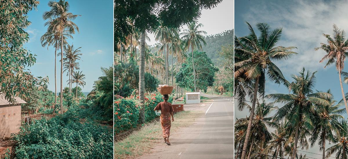 La vegetazione di rade palme a Lombok