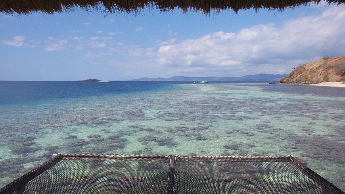 Flores e il Parco di Komodo: isola di Seraya dal resort The Seraya, rete sospesa sulle acque trasparenti della barriera corallina