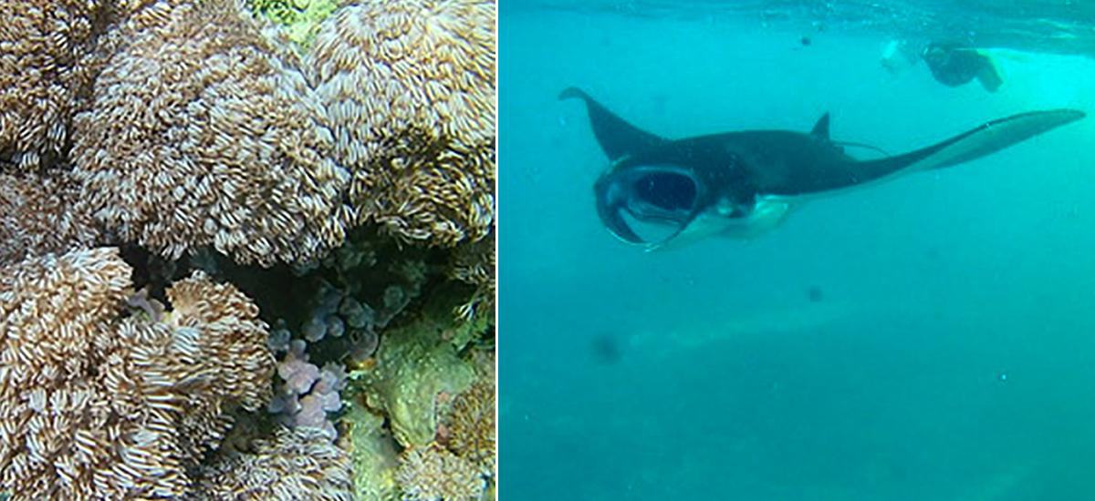 snorkeling sostenibile con le mante a nusa lembongan e penida vicino bali