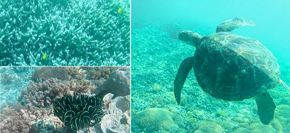 snorkeling sostenibile con le tartarughe a gili meno