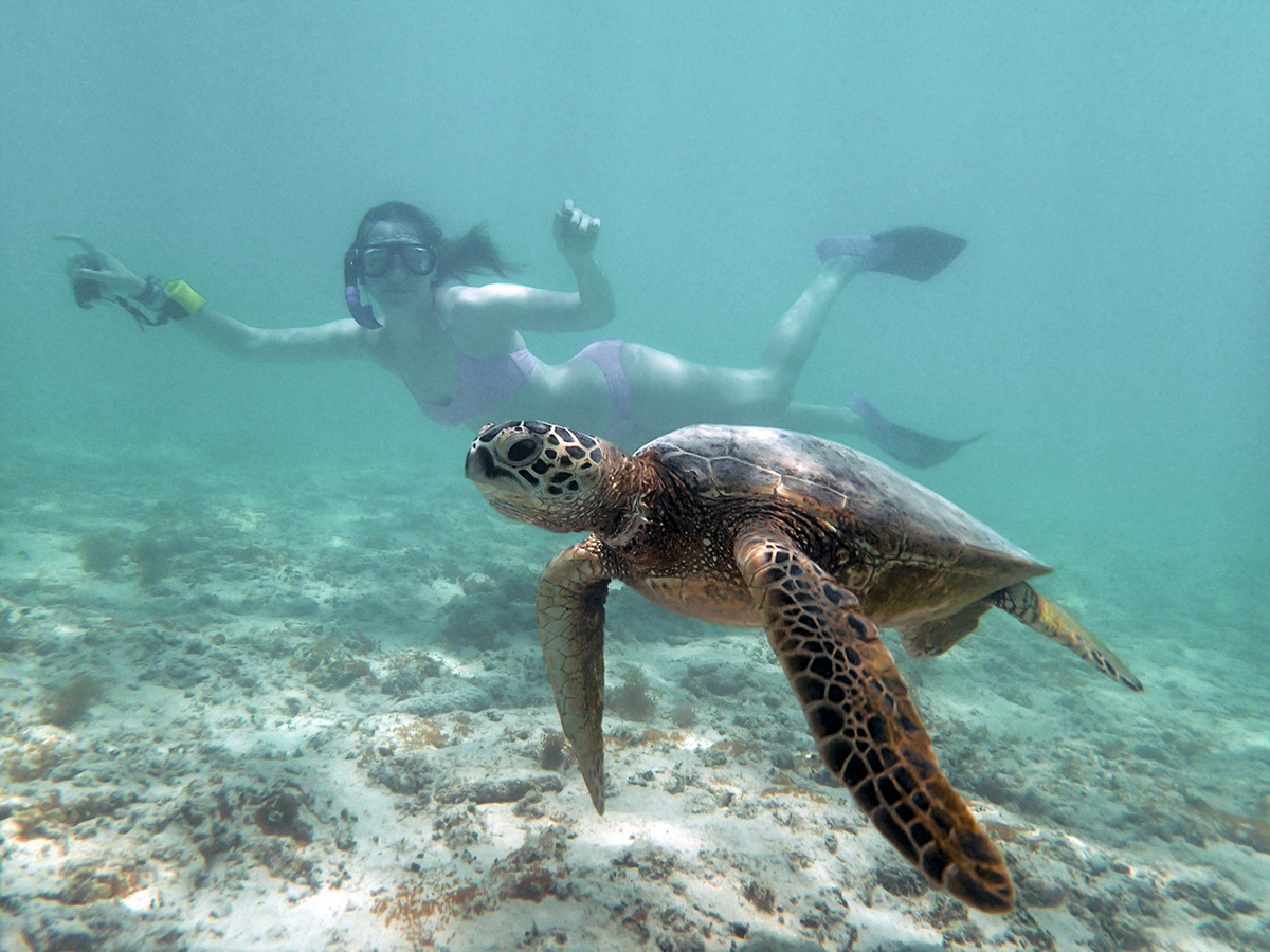 snorkeling sostenibile con tartarughe a bali