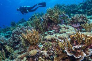 atauro-dive-resort-indonesia-booking-07