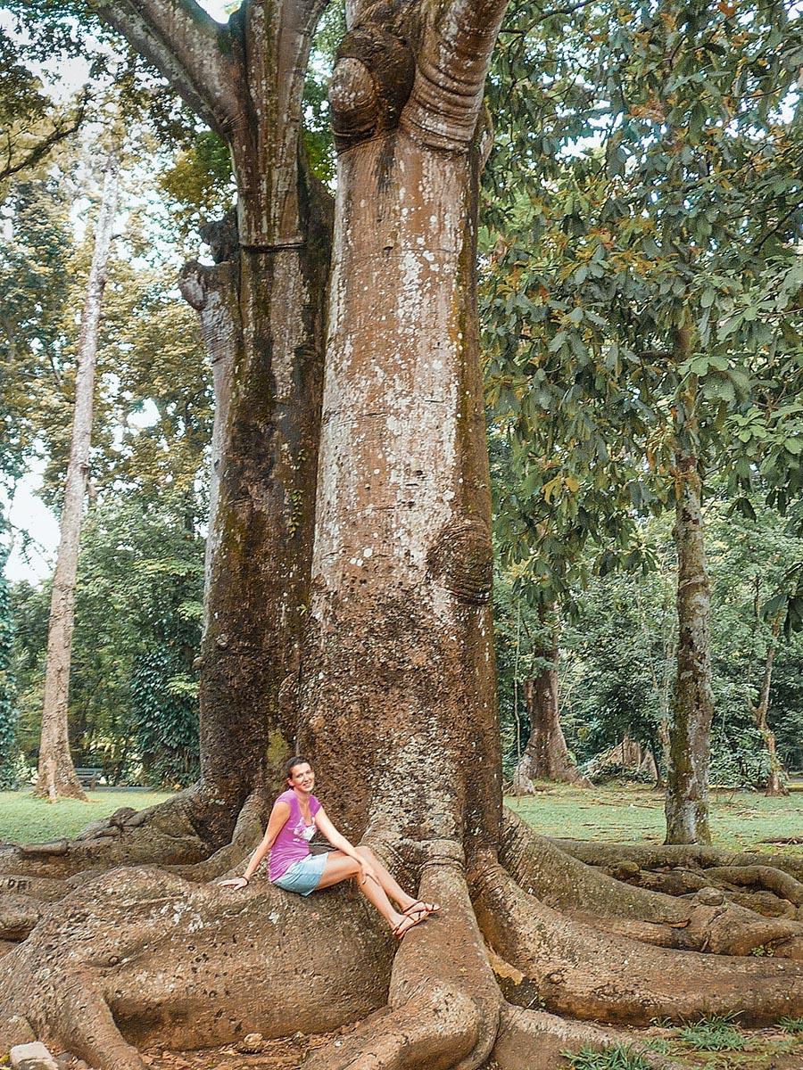 il giardino botanico di Bogor a Java