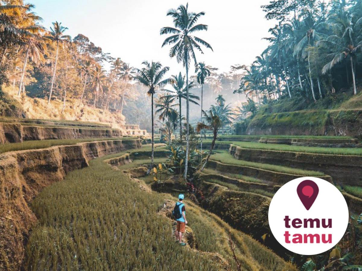 Risaie di Ubud a Bali e tour a Nusa Penida