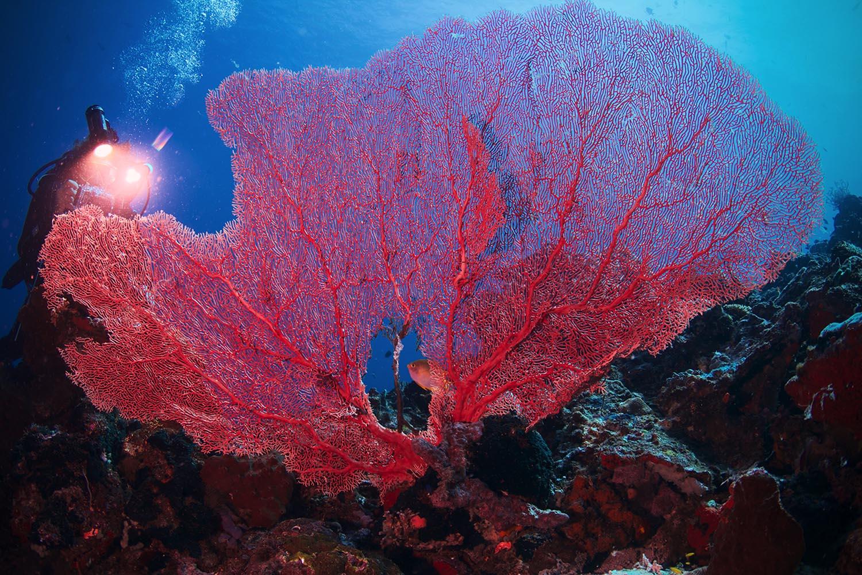 Coralli a Moyo Island