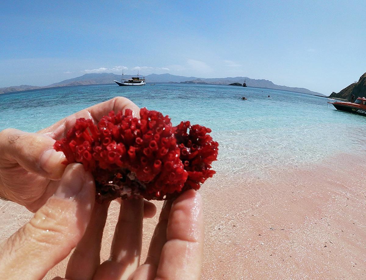 I coralli della Pink Beach