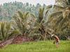 Canggu: la meta più vibrante del sud di Bali!