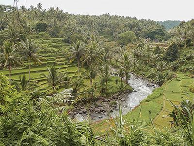Scegliere la migliore assicurazione di viaggio e organizzare un viaggio a Bali.